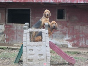 Two big dogs on a play slide outside
