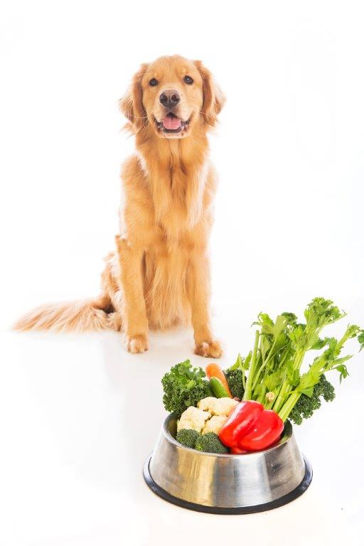 Golden retriever sitting with a bowl of fruit and veggies